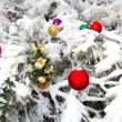 Stock Photo: In winter forest on Christmas tale occurs