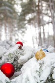 In winter forest on Christmas tale occurs — Stock Photo