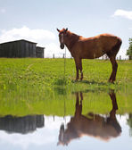 Horse by the lake — Stock Photo