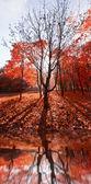 Camino en el bosque — Foto de Stock