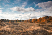 Autumn landscape of the Estonian forest — Foto de Stock