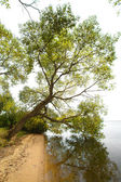 Autumn trees — Foto de Stock