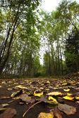 Autumn road in the park — Stockfoto