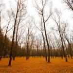 Park late autumn — Stock Photo