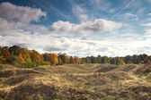 Autumn landscape of the Estonian forest — Stock Photo