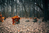Mystical cemetery in the woods — Stock Photo