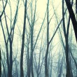Stock Photo: Forest in fog