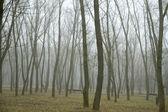 Bosque en mañana de invierno — Foto de Stock