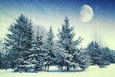 Winter night in the park. Elements of this image furnished by NA — Stock Photo