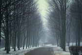 Winter night in the park. Elements of this image furnished by NA — Stockfoto