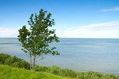 Deniz cliff — Stok fotoğraf