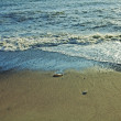 Stock Photo: Sandy seshore