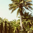 Tropical forest with palms - Stock Photo