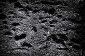 A textura de cimento — Foto Stock