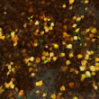 Fallen yellow leaves of birch in a pool of water — Stock Photo