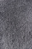 Texture of Smooth animal gray hair — Stock Photo