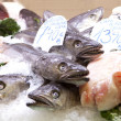Fresh fishes in a market, in La Boqueria — Stock Photo