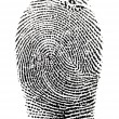 Real fingerprint in white background Super macro - Stock Photo