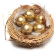 Golden egg in the nest isolated — Stock Photo