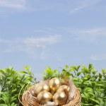 Golden eggs in nest on blue sky — Stock Photo