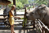 Black rhinoceros — Stock Photo