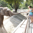 Stock Photo: Womfeeding elephant
