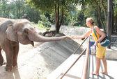 Woman feeding elephant — ストック写真