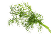 Green fennel leaf isolated — Stock Photo