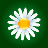 Daisy flower — Vector de stock