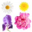 Stock Photo: Flowers isolated