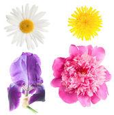 Flowers isolated — Stock Photo