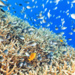 Coral reef panorama — Stockfoto #13829854
