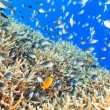 Coral reef panorama — Stock Photo