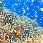 coral reef panorama — Stockfoto
