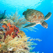 Turtle and coral — Stock Photo
