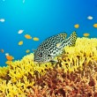 Sweetlips — Stock Photo #22259147