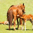 Horses and foals — Stock Photo