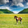 Little foal — Stock Photo