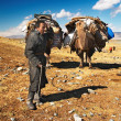 Mongolian nomads - Stock Photo