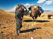 Mongolian nomads — Stock Photo