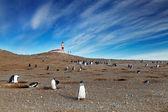 Magellanic penguins on Magdalena island, Chile — Stock Photo