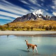 Torres del Paine National Park, Chile — Stock Photo #13596630