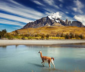Torres del paine national park, Chili — Photo