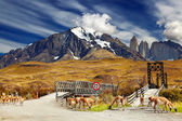 Torres del Paine National Park, Chile — Foto Stock