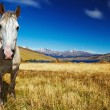 Horse in Torres del Paine, Chile - Stock Photo