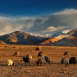 Tibetan landscape — Stock Photo #26806919