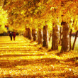 Golden autumn — Stock Photo #26807107