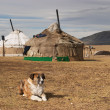 Yurta- traditional dwelling of mongolian nomads — Stock Photo