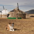 Stock Photo: Yurta- traditional dwelling of mongolinomads