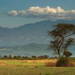 African savanna and Rwenzori Mountains, Queen Elizabeth N.P., Uganda — Stock Photo #28215289